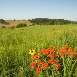 Pawnee Prairie
