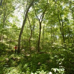 Inside the forest of MOFEP