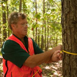 MDC staff measuring an overstory tree