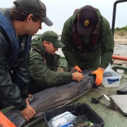 Scientists in boat taking measurements of catfish