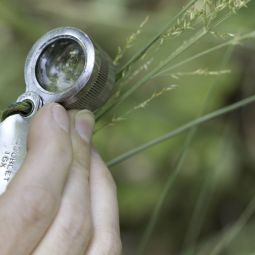 Botanist uses a hand lens to identify a plant