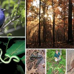 Collage of bird, sunrise, mouse, ground flora, salamanders, snake